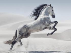 格力电器这匹老白马还可以买吗?