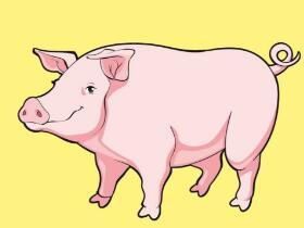 2019年生猪养殖股票可以投资吗